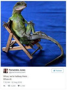 Photo of a Lizard on a chair by @peachesanscream